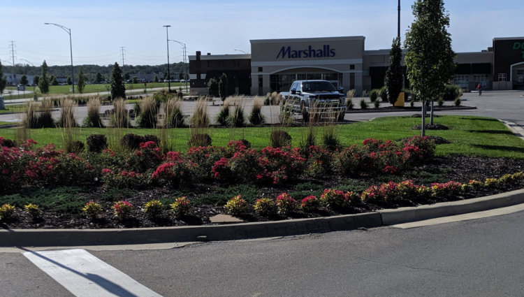 Commercial or Residential Lawn Mantainence Services 3